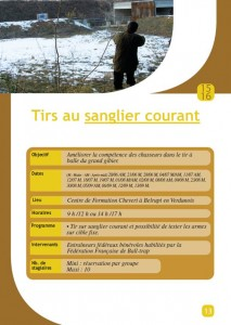 sanglier courant