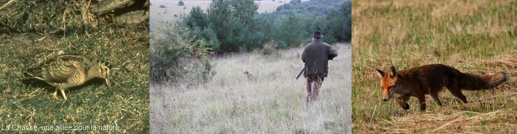 Périodes de chasse